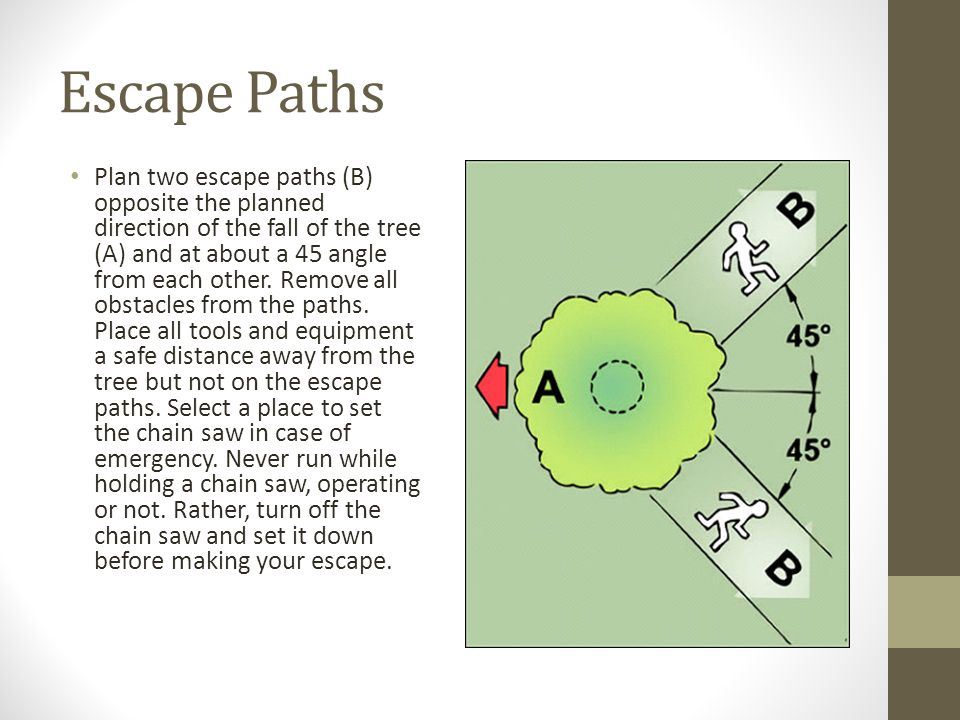 Escape Paths Plan two escape paths (B) opposite the planned direction of the fall of the tree (A) and at about a 45 angle from each other.