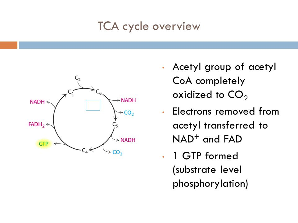 TCA cycle overview Acetyl group of acetyl CoA completely oxidized to CO 2 Electrons removed from acetyl transferred to NAD + and FAD 1 GTP formed (substrate level phosphorylation)