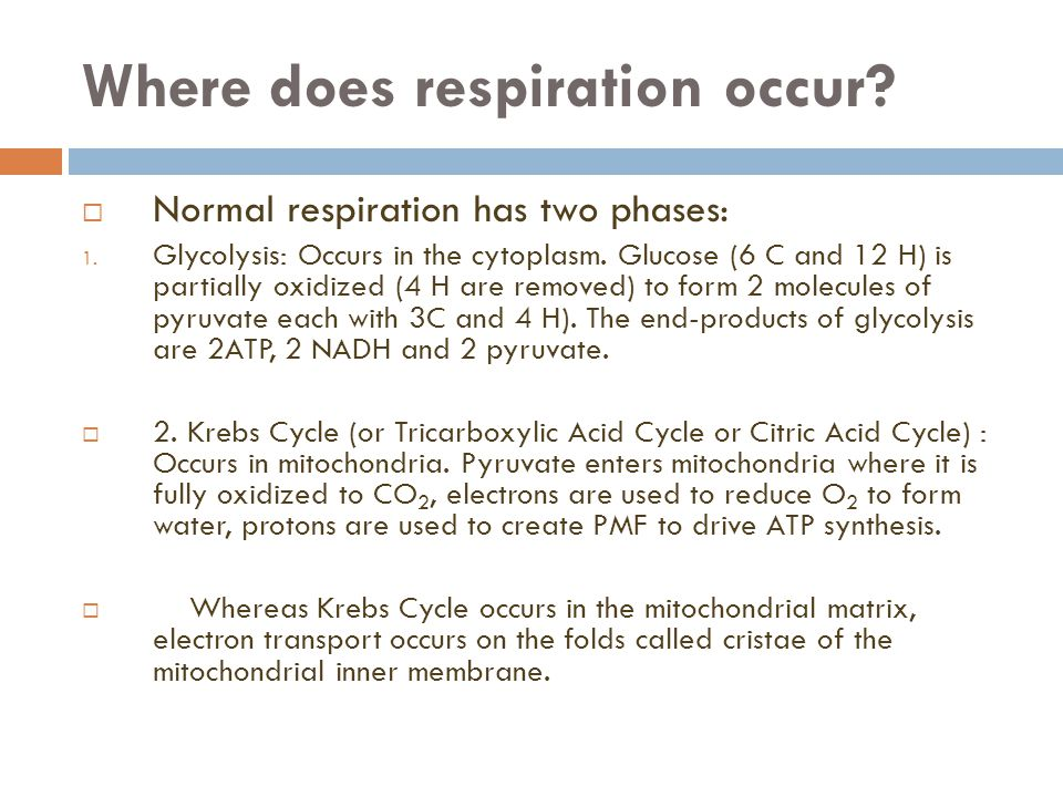 Where does respiration occur.  Normal respiration has two phases: 1.