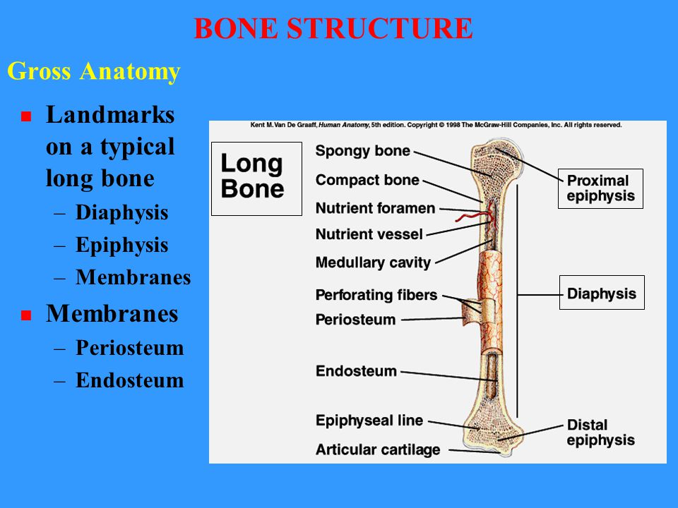 BONES AND BONE DISORDERS Dr. Anil Pawar Department of Zoology, DAVCG ...
