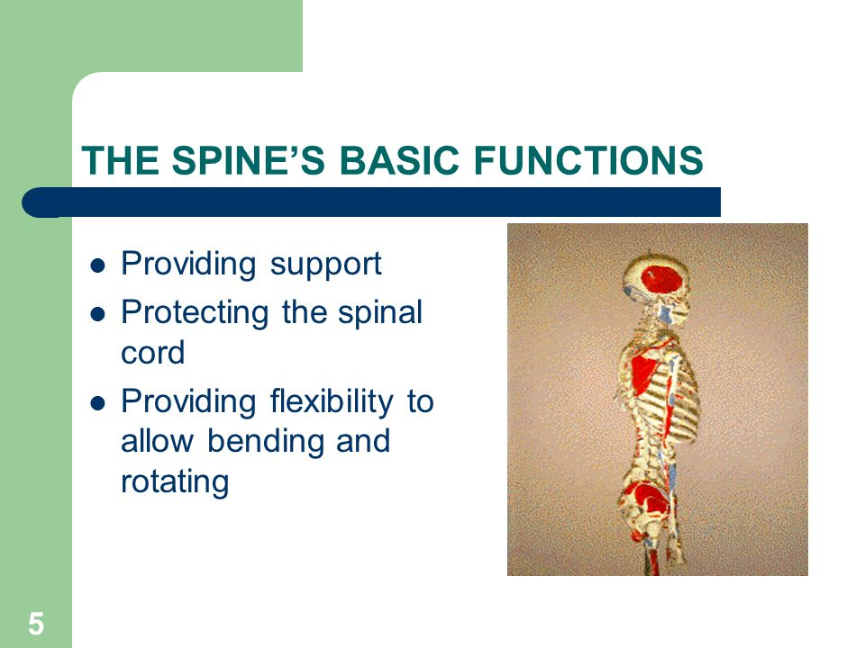 5 THE SPINE'S BASIC FUNCTIONS Providing support Protecting the spinal cord Providing flexibility to allow bending and rotating
