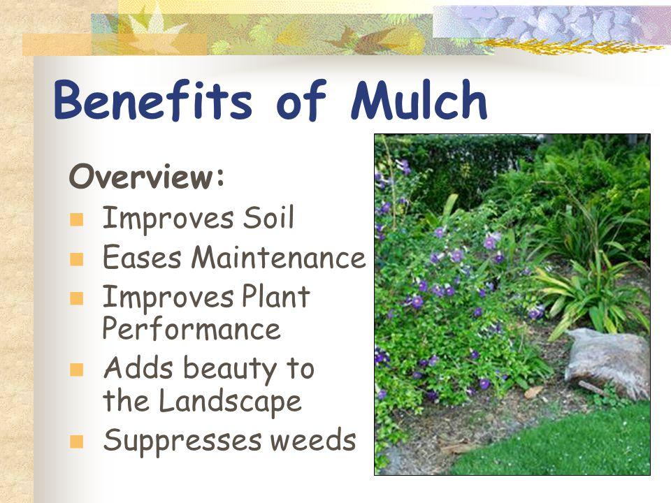 1 Landscape Mulches Mulch Define Benefits Comparing Mulches