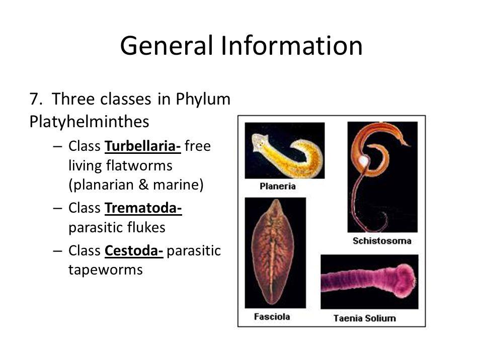 Nem síkbeli platyhelminthes. Ártalmatlan parazitakészítmények, Parazitakészítmények fényképei