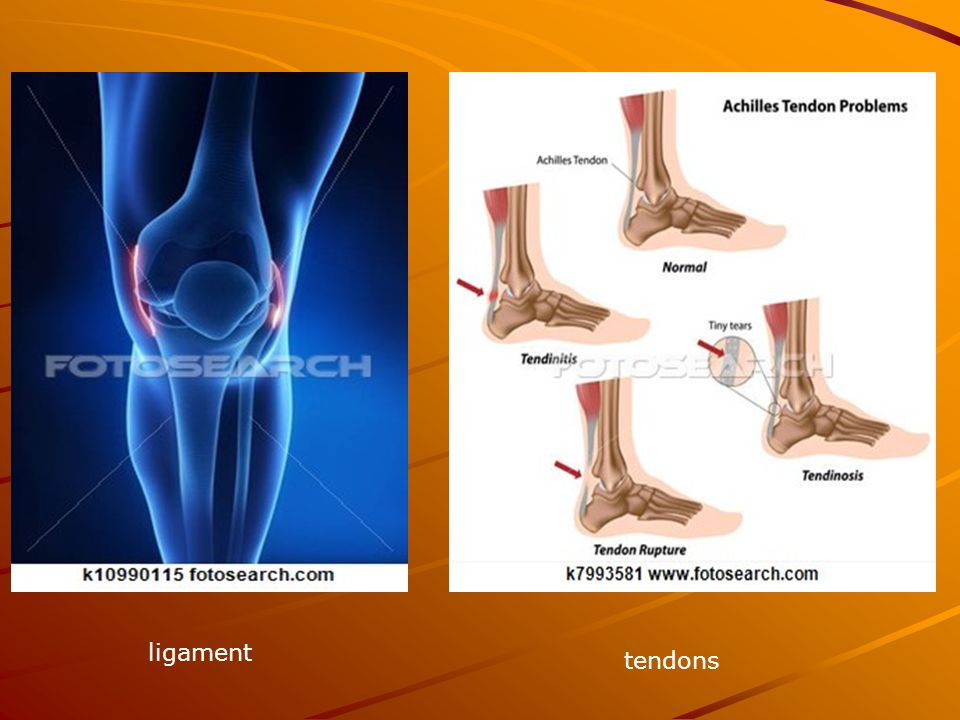ligament tendons