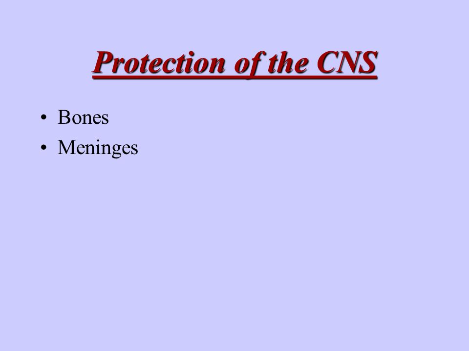 Objectives To learn protective parts/features of CNS To learn structure and function of the Spinal Cord To understand the brain structure and function as well as development.