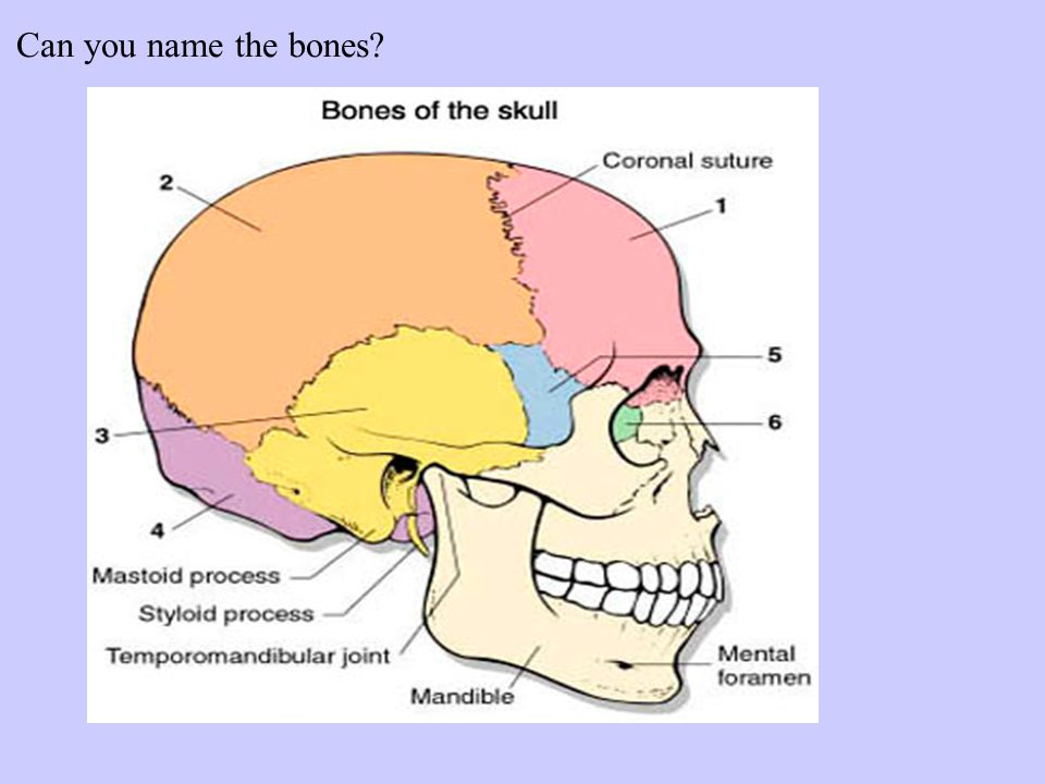 Protection of the CNS The brain & spinal cord are protected by bones, membranes, and fluid Bones A.