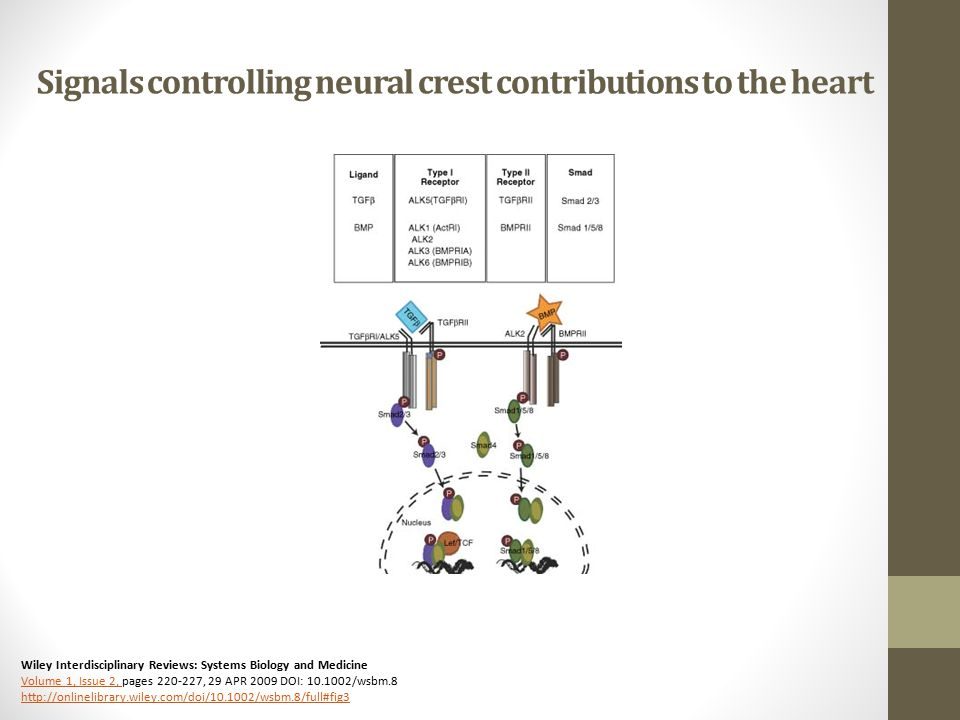 Signals controlling neural crest contributions to the heart Wiley Interdisciplinary Reviews: Systems Biology and Medicine Volume 1, Issue 2, pages , 29 APR 2009 DOI: /wsbm.8   Volume 1, Issue 2,