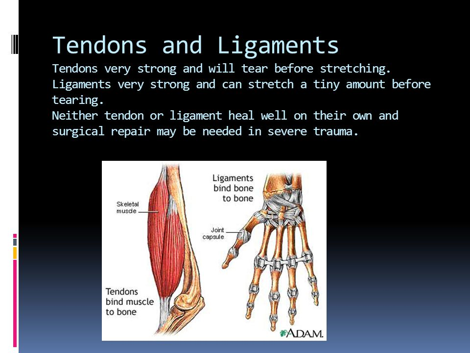 Synovial Joints Tendon And Ligaments Knee Hand Ligament