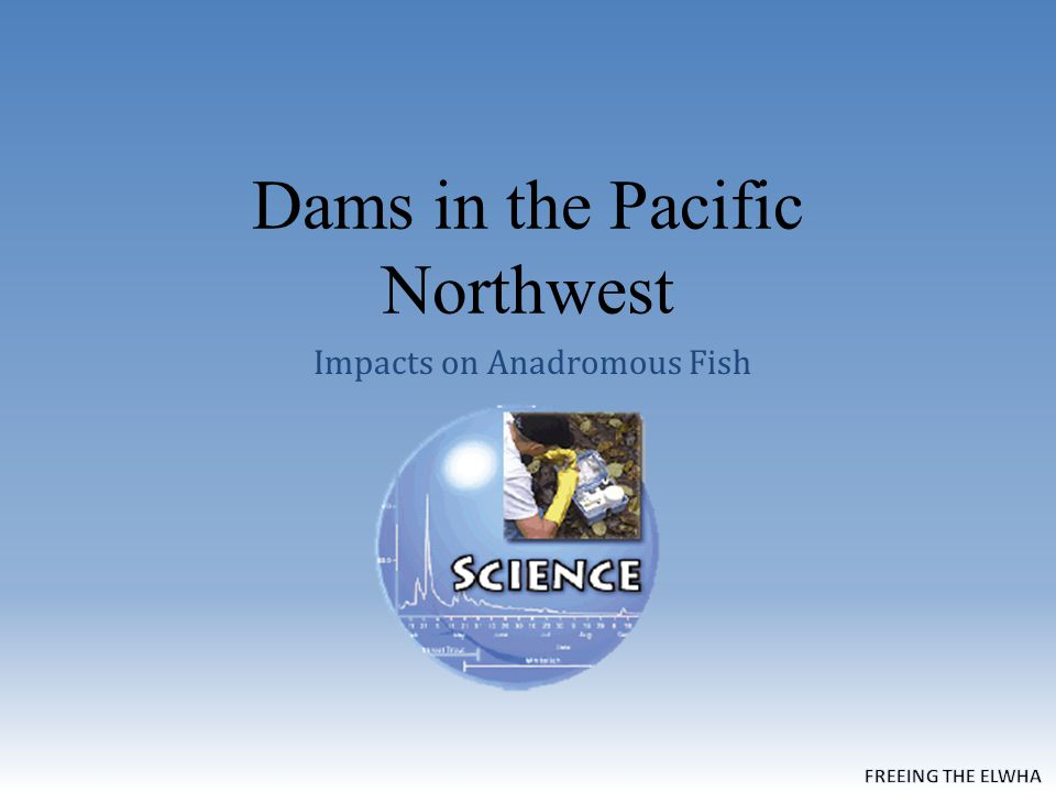 Dams in the Pacific Northwest Impacts on Anadromous Fish  - ppt download