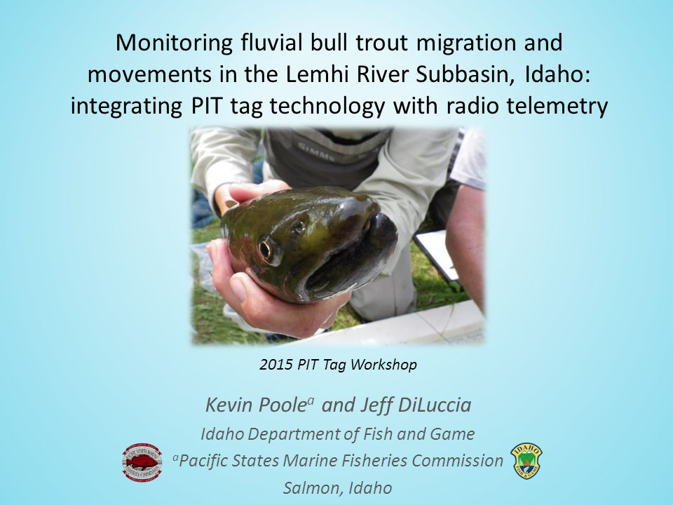 Monitoring fluvial bull trout migration and movements in the Lemhi River Subbasin, Idaho: integrating PIT tag technology with radio telemetry Kevin Poole a and Jeff DiLuccia Idaho Department of Fish and Game a Pacific States Marine Fisheries Commission Salmon, Idaho 2015 PIT Tag Workshop