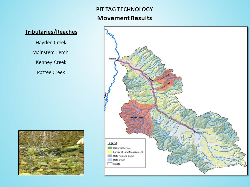 Tributaries/Reaches Hayden Creek Mainstem Lemhi Kenney Creek Pattee Creek PIT TAG TECHNOLOGY Movement Results
