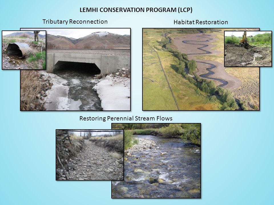 Tributary Reconnection Restoring Perennial Stream Flows Habitat Restoration LEMHI CONSERVATION PROGRAM (LCP)