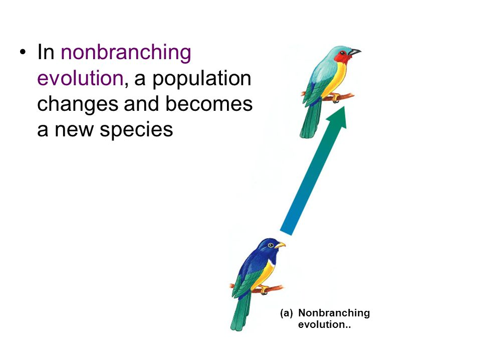 (a)Nonbranching evolution..