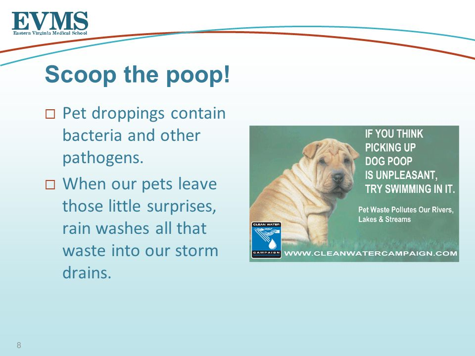 Pet droppings contain bacteria and other pathogens.