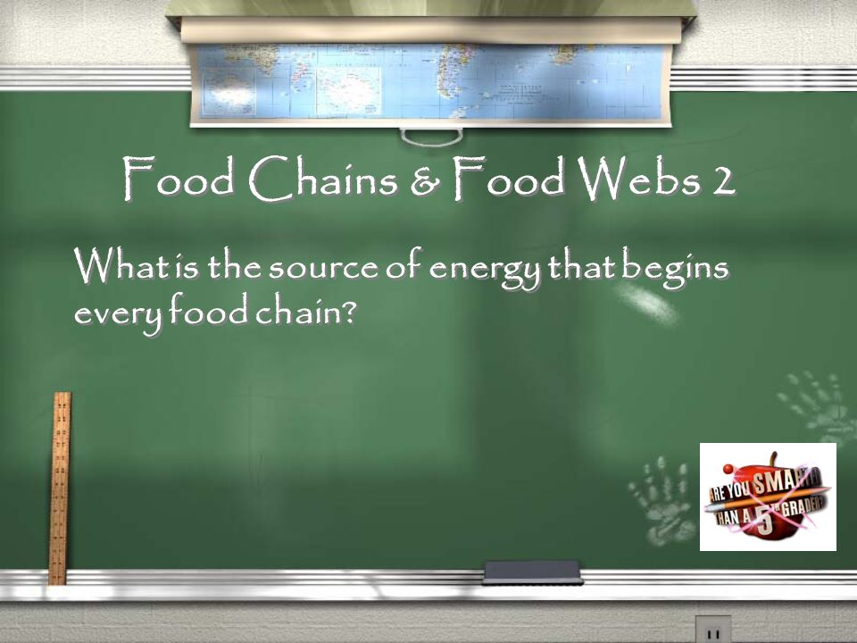 Food Chains & Food Webs 1 What is the set of steps in which organisms get the food they need to survive