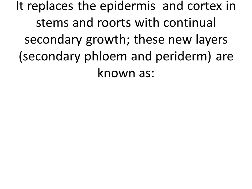 Periderm It replaces the epidermis and cortex in stems and roorts with continual secondary growth; these new layers (secondary phloem and periderm) are known as:
