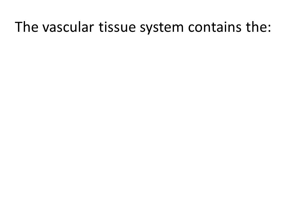 The vascular tissue system contains the:
