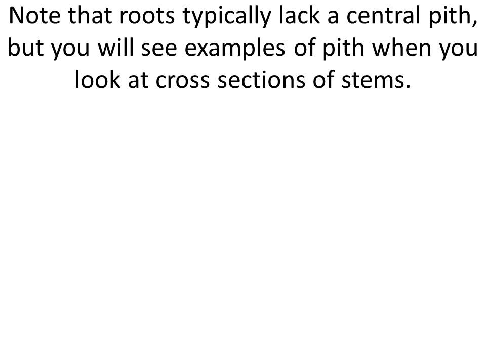 Note that roots typically lack a central pith, but you will see examples of pith when you look at cross sections of stems.