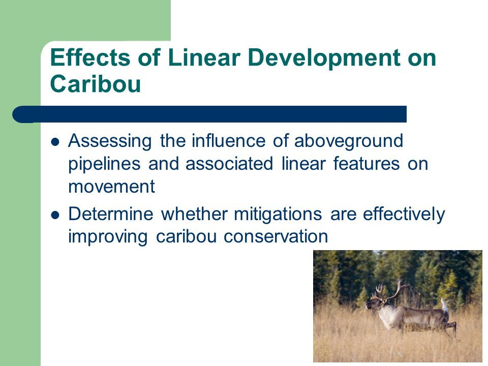 Effects of Linear Development on Caribou Assessing the influence of aboveground pipelines and associated linear features on movement Determine whether mitigations are effectively improving caribou conservation