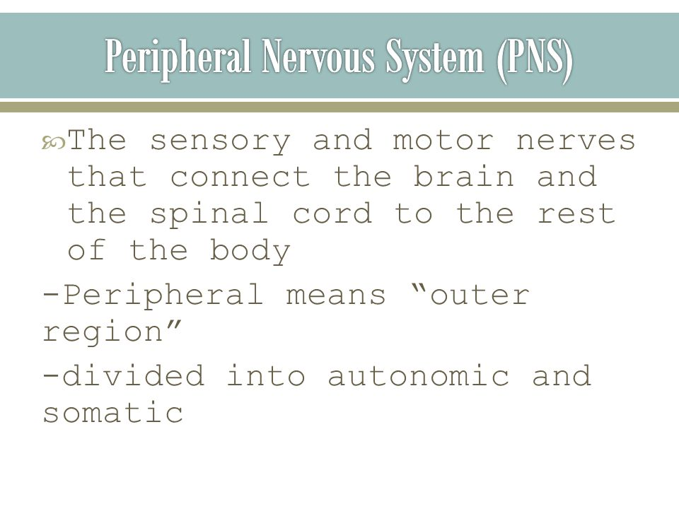  The sensory and motor nerves that connect the brain and the spinal cord to the rest of the body -Peripheral means outer region -divided into autonomic and somatic