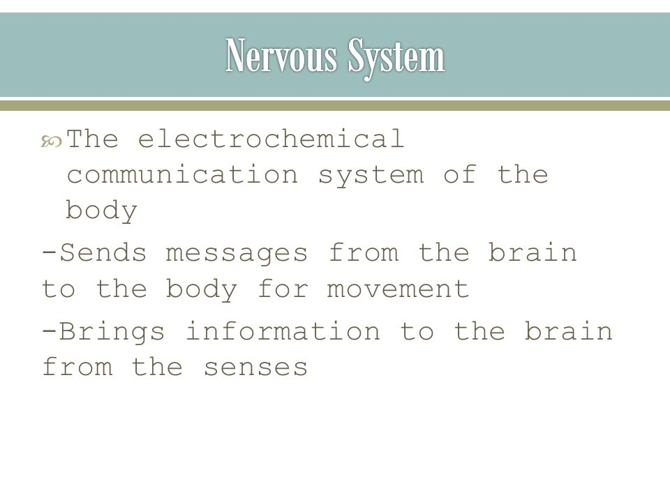  The electrochemical communication system of the body -Sends messages from the brain to the body for movement -Brings information to the brain from the senses