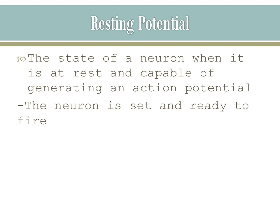  The state of a neuron when it is at rest and capable of generating an action potential -The neuron is set and ready to fire