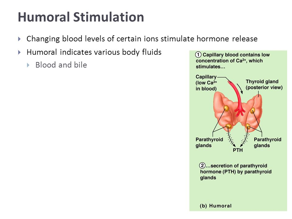 Humoral Stimulation  Changing blood levels of certain ions stimulate hormone release  Humoral indicates various body fluids  Blood and bile