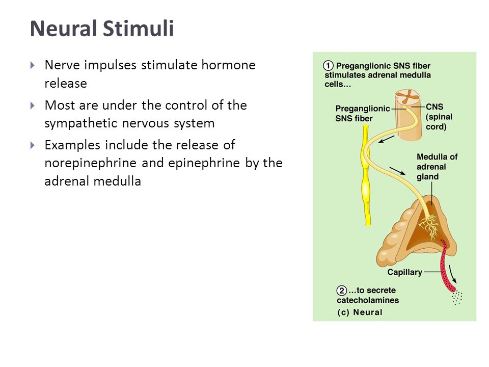 Neural Stimuli  Nerve impulses stimulate hormone release  Most are under the control of the sympathetic nervous system  Examples include the release of norepinephrine and epinephrine by the adrenal medulla