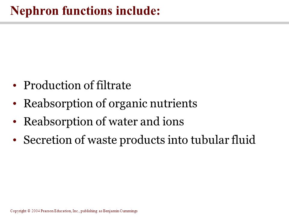 Copyright © 2004 Pearson Education, Inc., publishing as Benjamin Cummings Production of filtrate Reabsorption of organic nutrients Reabsorption of water and ions Secretion of waste products into tubular fluid Nephron functions include: