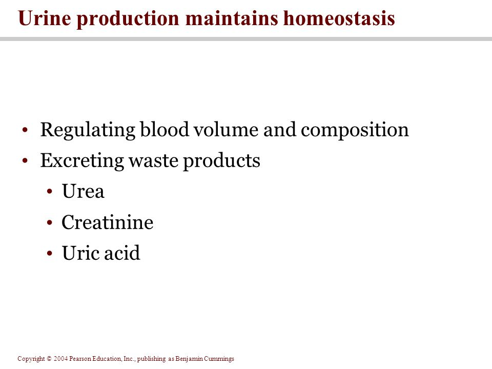 Copyright © 2004 Pearson Education, Inc., publishing as Benjamin Cummings Regulating blood volume and composition Excreting waste products Urea Creatinine Uric acid Urine production maintains homeostasis