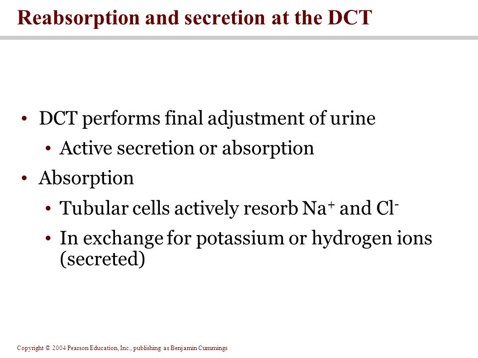 Copyright © 2004 Pearson Education, Inc., publishing as Benjamin Cummings DCT performs final adjustment of urine Active secretion or absorption Absorption Tubular cells actively resorb Na + and Cl - In exchange for potassium or hydrogen ions (secreted) Reabsorption and secretion at the DCT