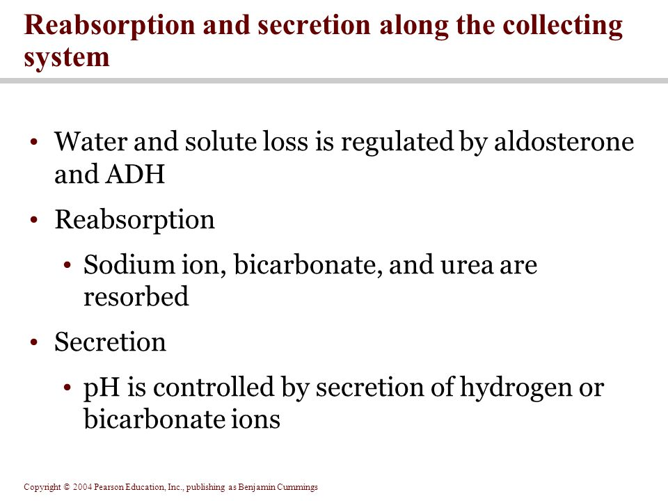 Copyright © 2004 Pearson Education, Inc., publishing as Benjamin Cummings Reabsorption and secretion along the collecting system Water and solute loss is regulated by aldosterone and ADH Reabsorption Sodium ion, bicarbonate, and urea are resorbed Secretion pH is controlled by secretion of hydrogen or bicarbonate ions