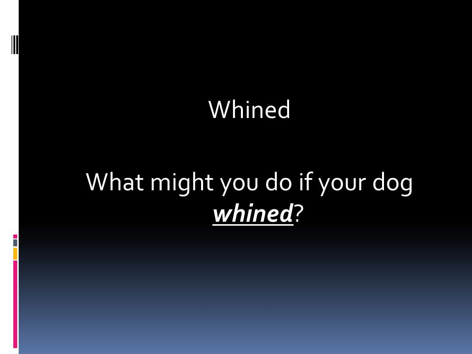 Whined What might you do if your dog whined