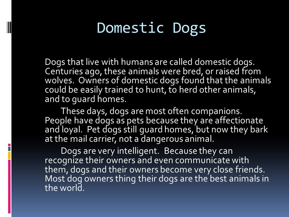 Domestic Dogs Dogs that live with humans are called domestic dogs.