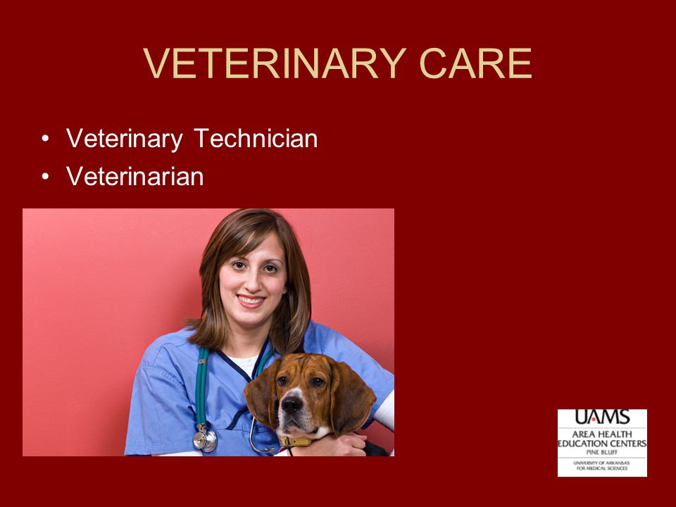 VETERINARY CARE Veterinary Technician Veterinarian