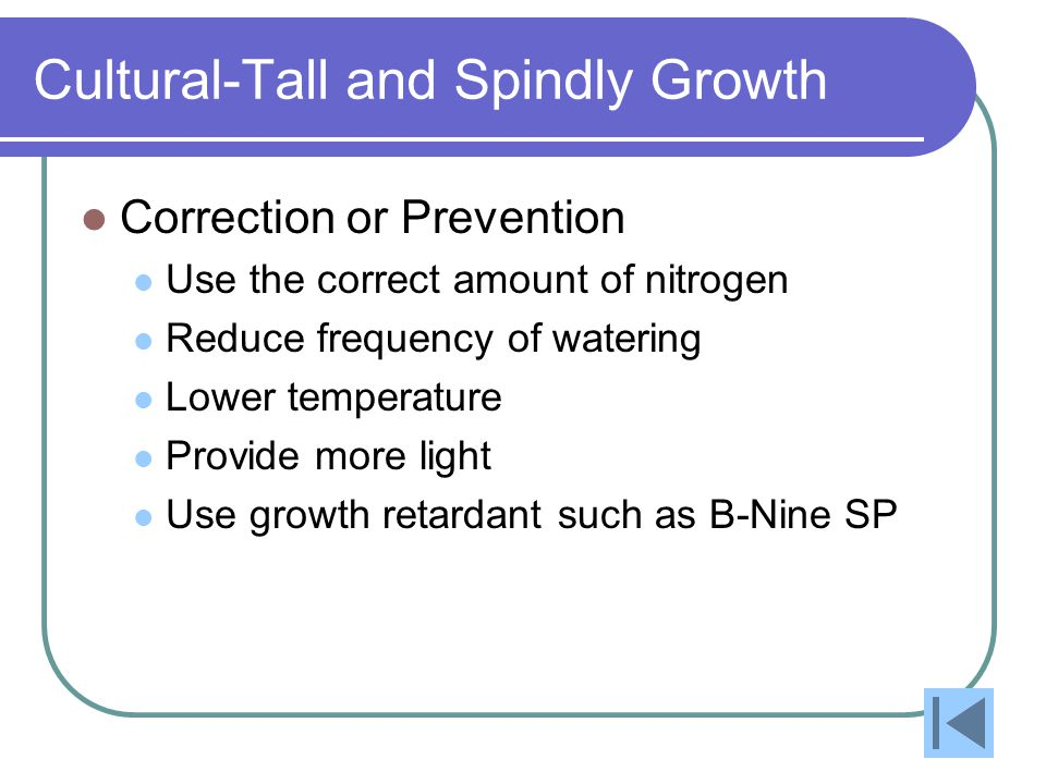 Cultural-Tall and Spindly Growth Correction or Prevention Use the correct amount of nitrogen Reduce frequency of watering Lower temperature Provide more light Use growth retardant such as B-Nine SP