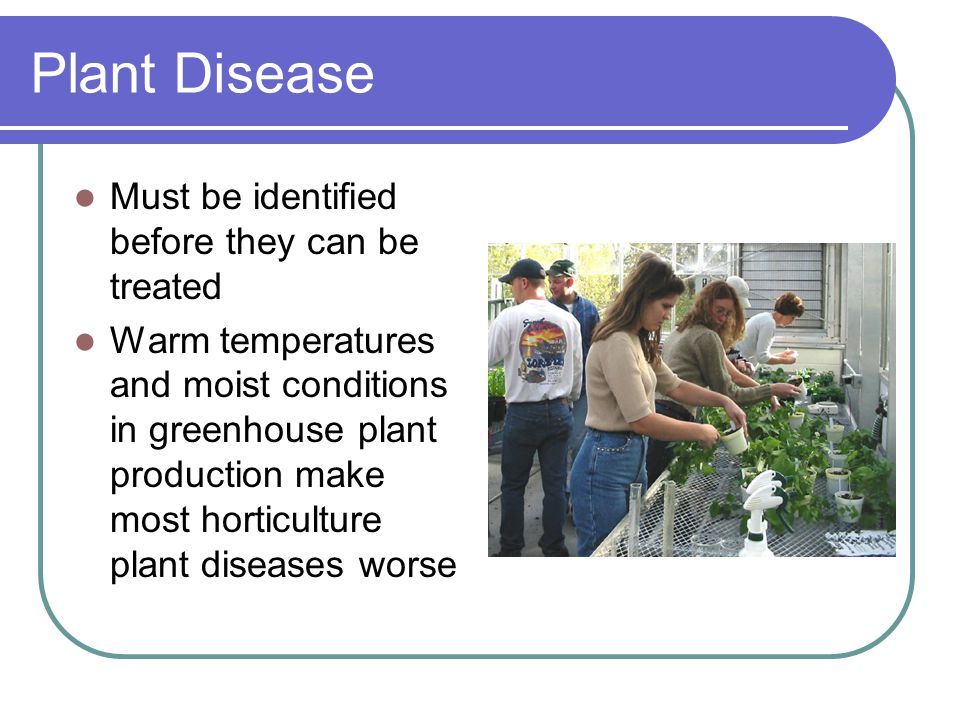 Plant Disease Must be identified before they can be treated Warm temperatures and moist conditions in greenhouse plant production make most horticulture plant diseases worse