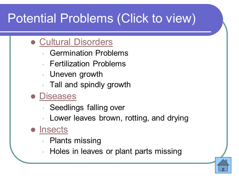 Potential Problems (Click to view) Cultural Disorders Germination Problems Fertilization Problems Uneven growth Tall and spindly growth Diseases Seedlings falling over Lower leaves brown, rotting, and drying Insects Plants missing Holes in leaves or plant parts missing