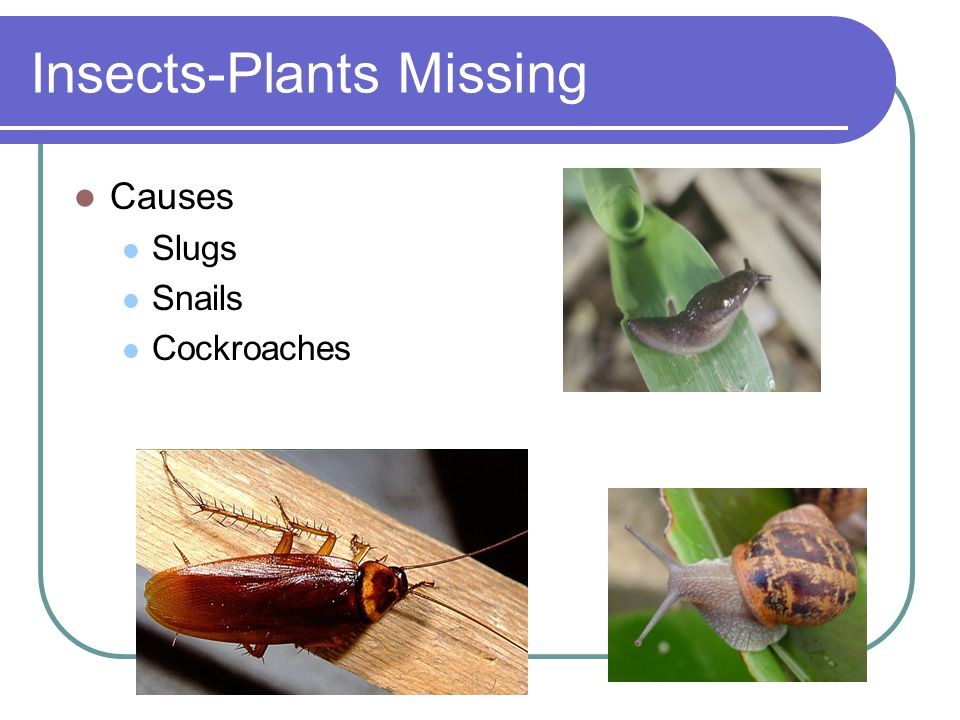 Insects-Plants Missing Causes Slugs Snails Cockroaches