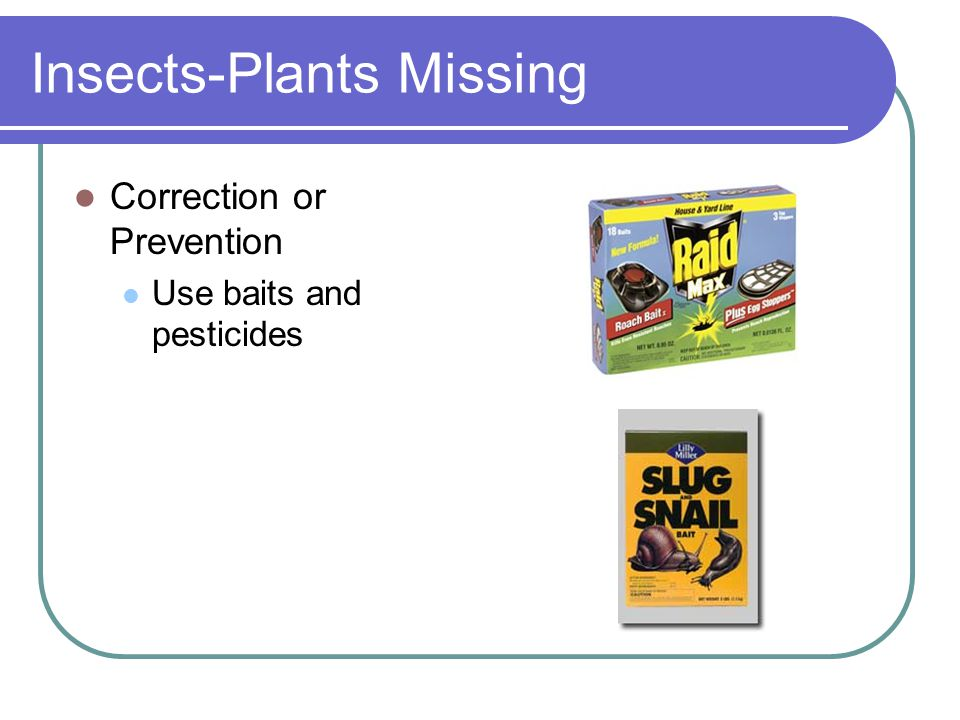 Insects-Plants Missing Correction or Prevention Use baits and pesticides
