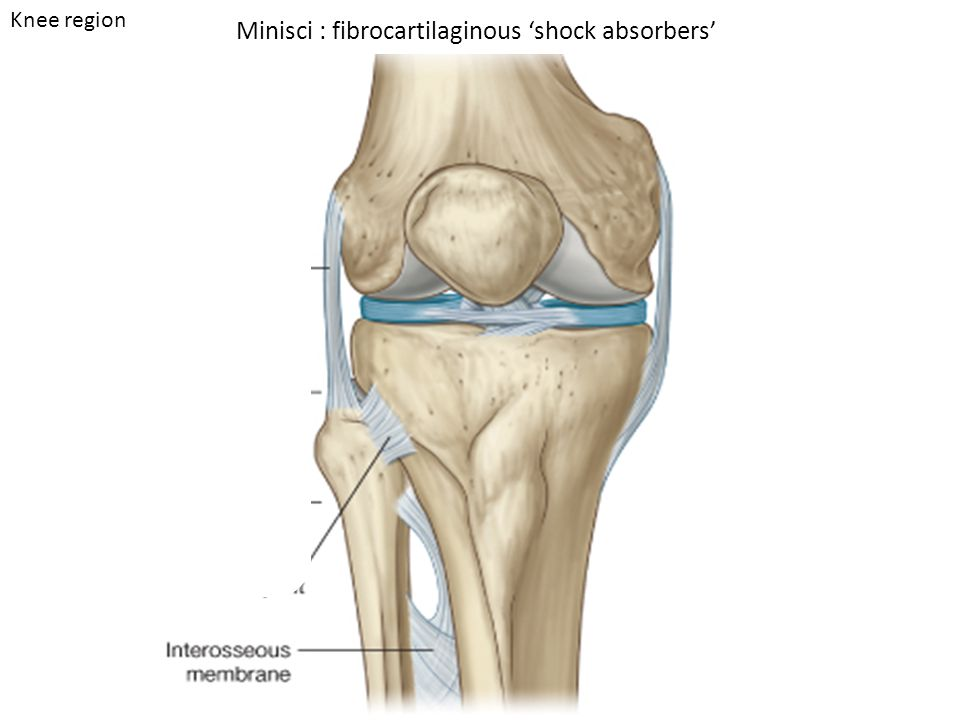 Joints Hip region Knee region Ankle region. sacroiliac joints hip ...