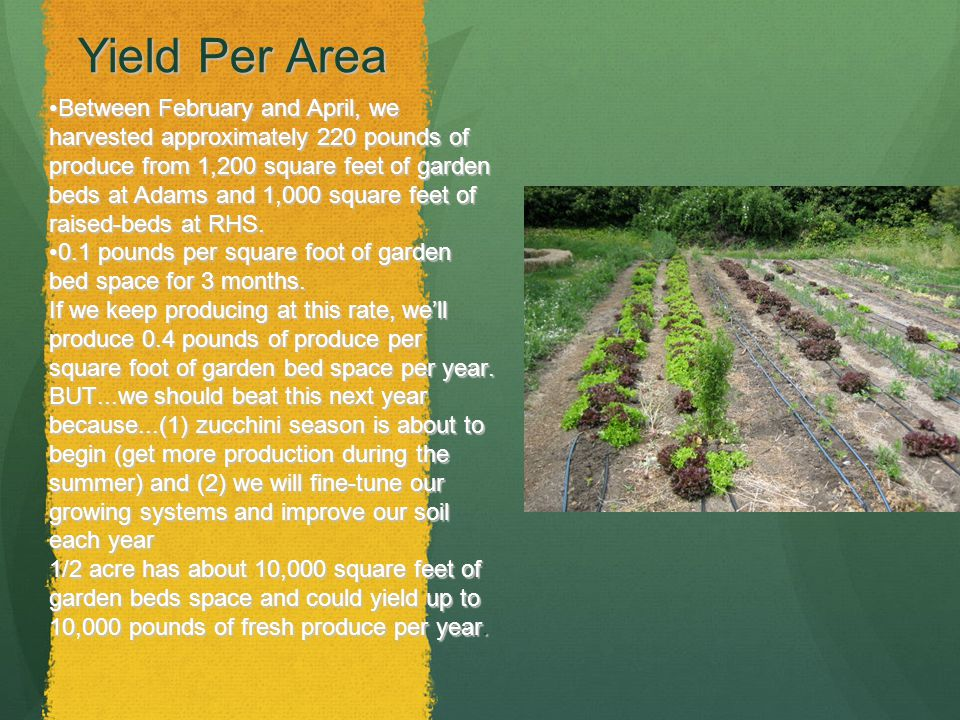 Yield Per Area Between February and April, we harvested approximately 220 pounds of produce from 1,200 square feet of garden beds at Adams and 1,000 square feet of raised-beds at RHS.Between February and April, we harvested approximately 220 pounds of produce from 1,200 square feet of garden beds at Adams and 1,000 square feet of raised-beds at RHS.