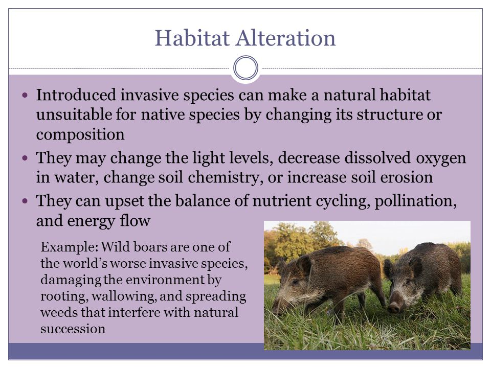 how introduced species affect ecosystems introduced species. - ppt