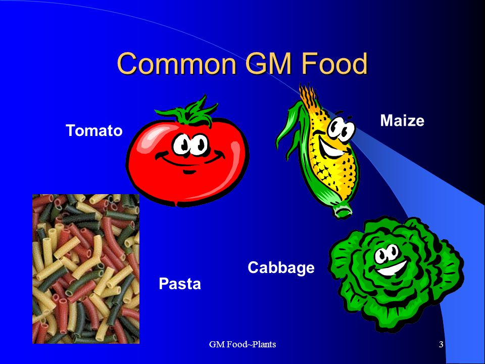 GM Food~Plants2 What is GM Food.