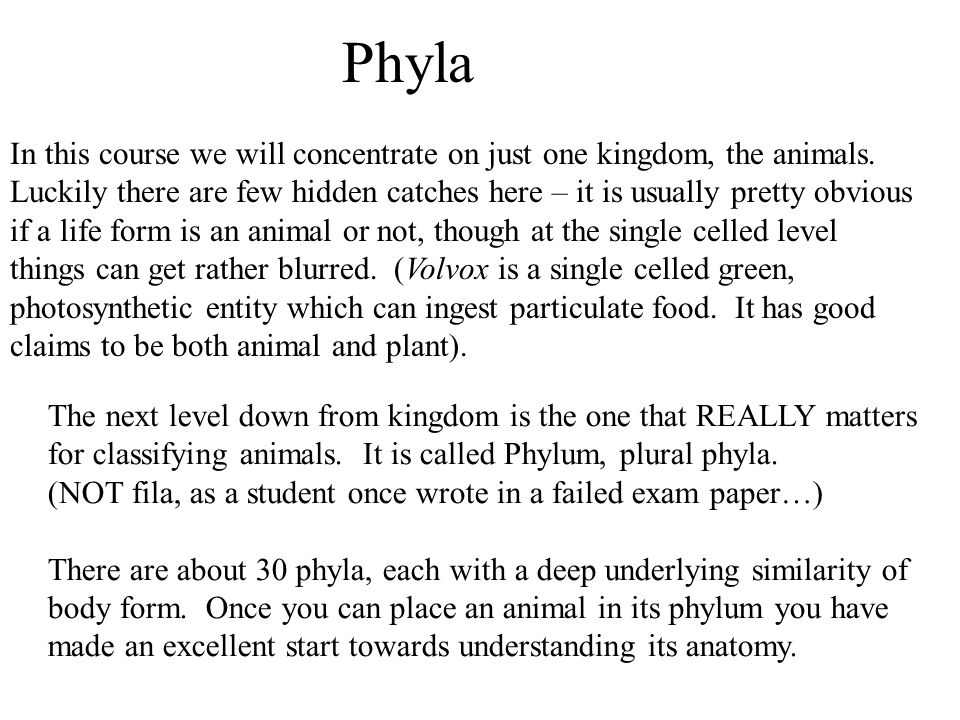 animal diversity exam questions