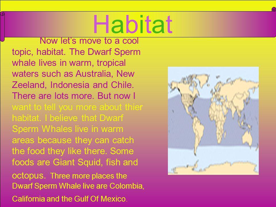 Habitat of the pygmy sperm whale