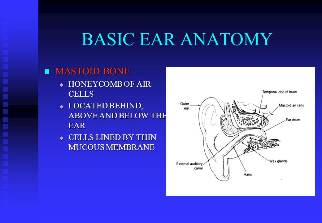 BASIC EAR ANATOMY OR WHATS IN AN EAR. BASIC EAR ANATOMY EXPECTED ...