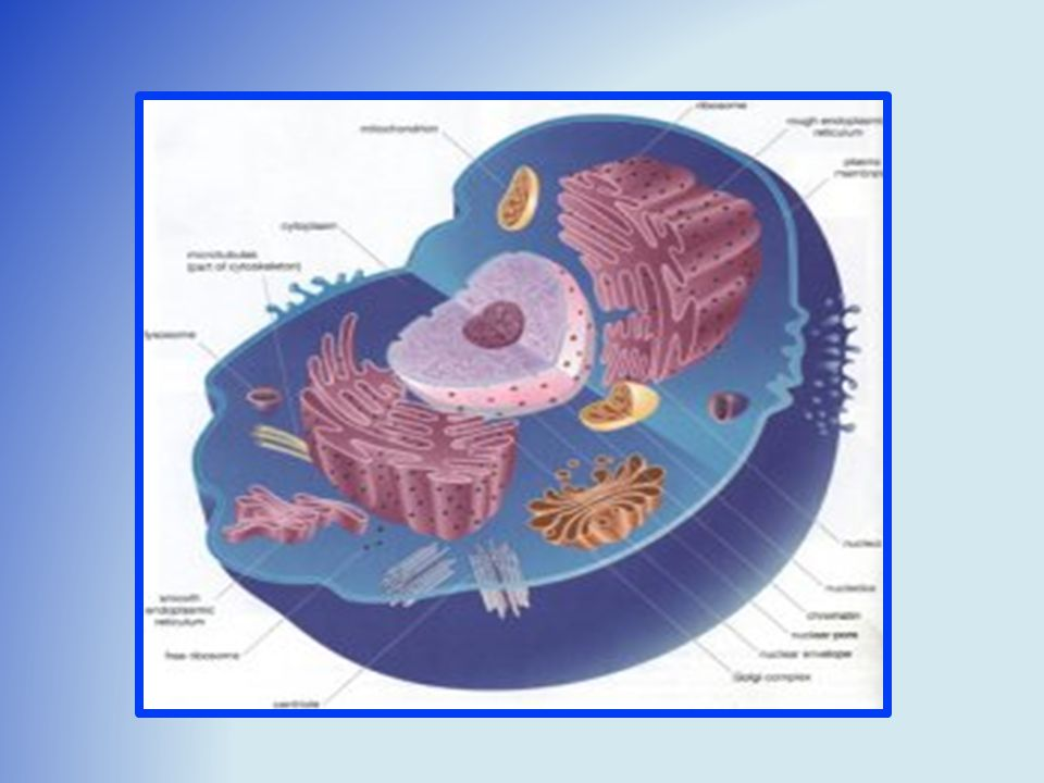 Anatomy & Physiology Cell + Cell Cells + Cells Tissue + Tissues ...