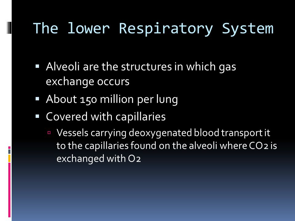 The lower Respiratory System  Alveoli are the structures in which gas exchange occurs  About 150 million per lung  Covered with capillaries  Vessels carrying deoxygenated blood transport it to the capillaries found on the alveoli where CO2 is exchanged with O2