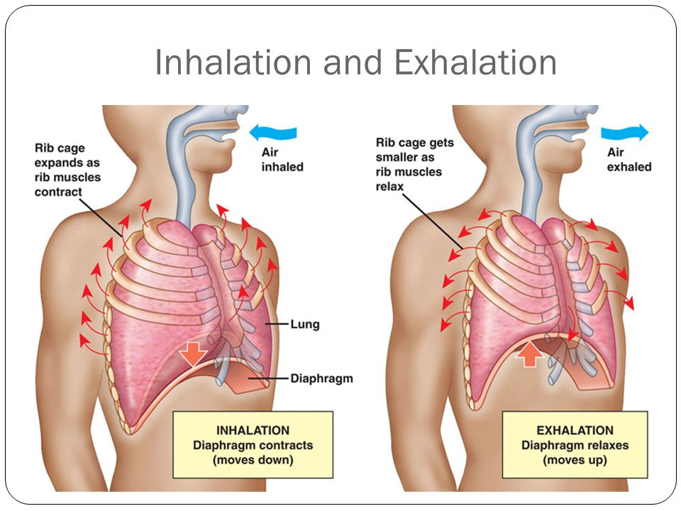 6 inhalation and exhalation
